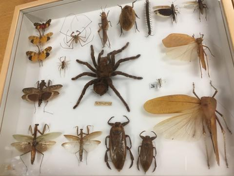5) Thursday, May 3, 2018 - Cleveland Museum of Natural History Members Behind-The-Scenes Night