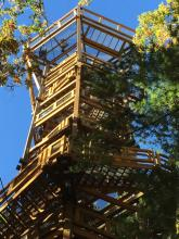 Holden Arboretum's new Kalberer Emergent Tower